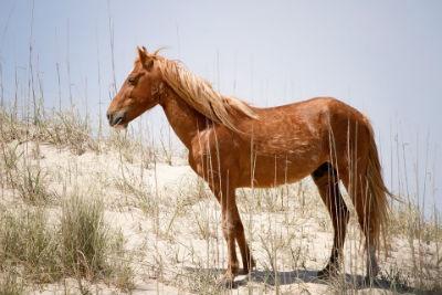 Caballos Mustang cuidados