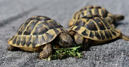 longevidad tortugas