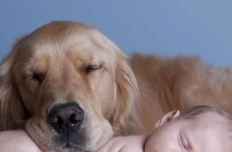 Mejor raza de perro para ser tu mascota