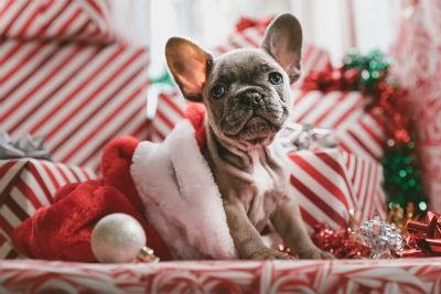 Tips para tu decoración navideña