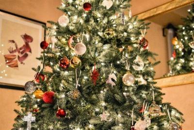 elegir el árbol de navidad ideal
