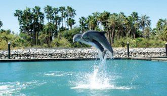 Dolphin Discovery disfrutar junto a los delfines en Los Cabos