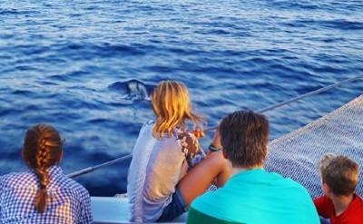 Excursion barco avistamiento delfines Mallorca