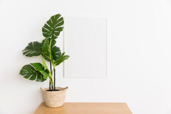 Planta para espacios interiores